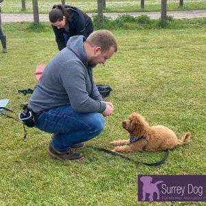 Surrey Dog School Class Images #4