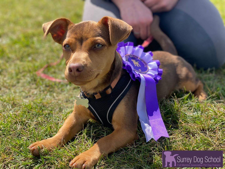 Surrey Dog School Class Images #1